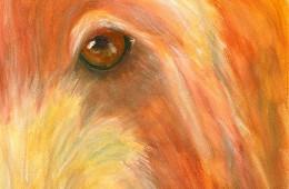 Chewy Eye