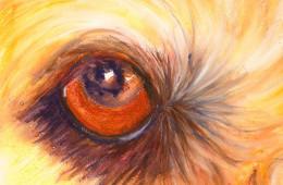 Soli Eye 1