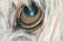 Ariel Eye